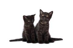 Two black kittens Stock Photos