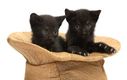 Two black kittens. Two kittens sit in a hat Royalty Free Stock Photo