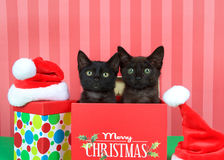 Two black kittens in Christmas presents royalty free stock photo