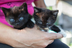 Two black kittens Stock Image