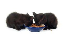 Two black kittens at food bowl Royalty Free Stock Image