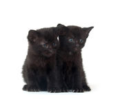 Two black kittens on white Royalty Free Stock Photo
