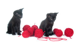 Two black kittens and yarn Royalty Free Stock Photography