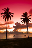 Two Black Palm On Night Beach Stock Images