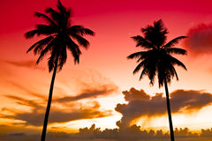 Two Black Palm On Night Beach Royalty Free Stock Photography