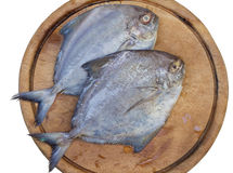 Two of black Pomfret Stock Photography