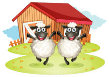 Two black sheeps with a barn at the back Royalty Free Stock Image
