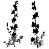 Two black silhouette of plants. Royalty Free Stock Image