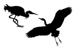 Two black silhouettes of Big White heron Royalty Free Stock Image