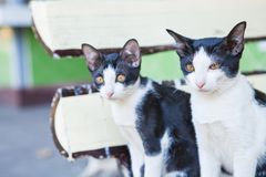 Two black and white cats looking. In outdoor royalty free stock photography