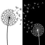 Two black and white dandelions blowing. Beautiful abstract background with two stylized black and white dandelions blowing. Floral stylish trendy wallpaper with Stock Images