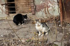 Two black and white kittens near the house stock images