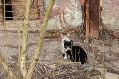 Two black and white kittens near the house stock photography