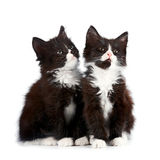 Two black and white kittens Stock Photos