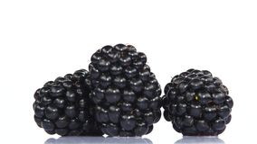 Two blackberries on a white background. Close up. Rotating. Two fresh blackberry, fresh berry blackberry, healthy berries, fresh fruits, healthy food, on white stock footage
