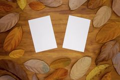 Two blank postcard on warm wooden background with orange leaf frame. Empty white paper card. In autumn seasonal decor. Front and back side mockup. Fall season stock images
