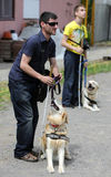 Two blind people with their guide dogs Stock Images