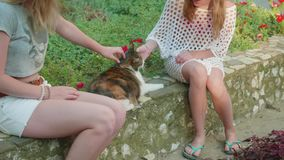 Two blondes stroking a pregnant three-colored cat against a lawn background with flowers. Two blondes stroking pregnant three-colored cat against a lawn stock footage