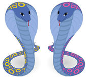 Two blue cobras. Vector illustration of two blue cobras Royalty Free Stock Photo