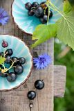 Two blue cups with black currants on the bench Stock Photography