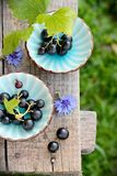 Two blue cups with black currants on the bench Stock Photo