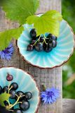 Two blue cups with black currants on the bench Royalty Free Stock Image