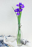 Two blue irise flowers Stock Photography