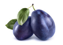 Two blue plums  on white background Royalty Free Stock Image