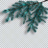 Two blue realistic branch of tree on background checker. Fir branches located in the corner with a shadow. Christmas vector illustration Royalty Free Stock Photos