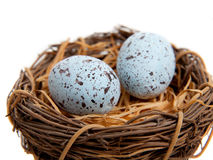 Two blue Robins Eggs in Nest-Decoration Royalty Free Stock Image