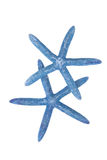 Two blue starfish Royalty Free Stock Photography
