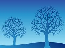 Two blue trees Stock Photography