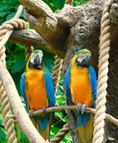 Parrots together Stock Photo
