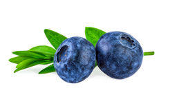 Two Blueberries with Green Leaf Isolated on White Stock Images