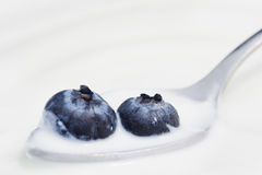Two Blueberries and Yogurt on a Spoon. Two blueberries in a bowl of yogurt, on a spoon (shallow focus royalty free stock image