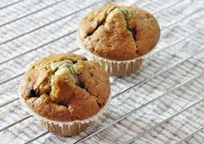 Two blueberry muffins Royalty Free Stock Photo