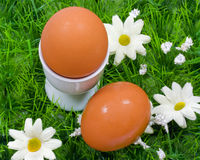 Two boiled eggs Stock Image