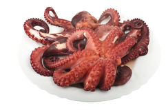 Two boiled octopus Stock Images