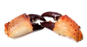 Two boiled pincers from crab Stock Photography