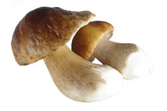 Two boletus Royalty Free Stock Photography
