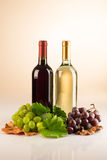 Two bottle of red and white wine with grapes and vine leaves Royalty Free Stock Images