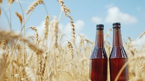 Two bottles of cool beer on a background of wheat field and blue sky. Natural product concept royalty free stock photography