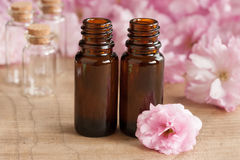 Two bottles of essential oil, with pink japanese cherry blossoms in the background royalty free stock images