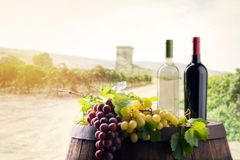 Two bottles of wine in on wineyard royalty free stock photography