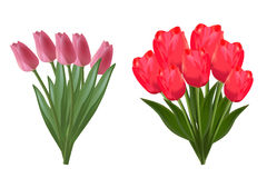 Two bouquets of tulips on white background vector illustration