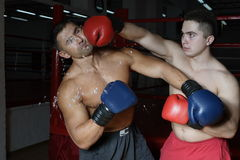 Two boxers. Two young boxers beat each other on a ring Royalty Free Stock Photo