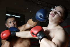Two boxers. Train in a gym against a dark background Stock Image