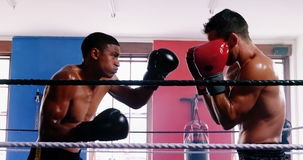 Two boxers fighting in boxing ring. Two aggressive boxers fighting in boxing ring stock video footage