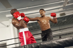 Two Boxers Fighting In Ring Stock Photo