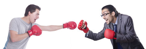 The two boxers isolated on the white royalty free stock photo
